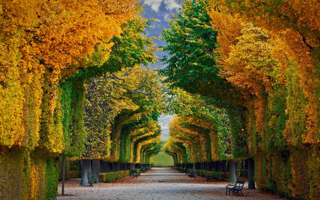 Foliage Vienna