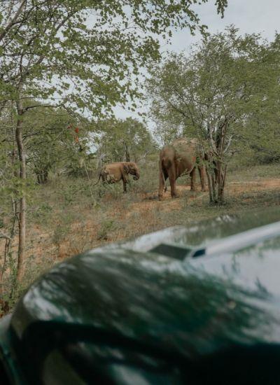 Uda Walawe safari elefante