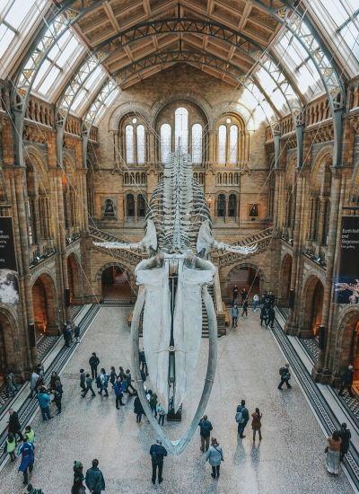 National History Museum Londra