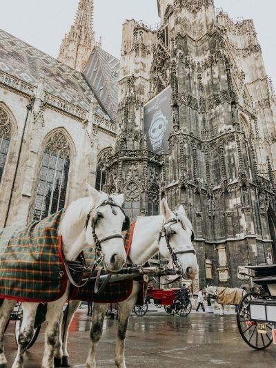 Duomo di Santo Stefano, Vienna